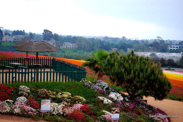 Весна 2014 Сан-Диего